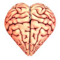 Brza hrana uništava mozak
